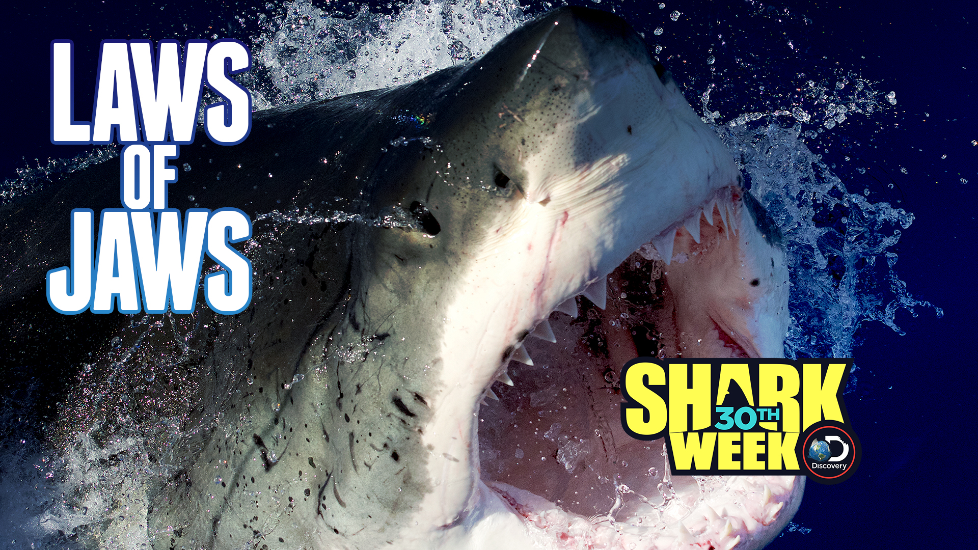 Laws of Jaws