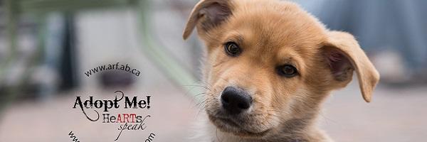 Dec. 14: Puppy Paw-looza