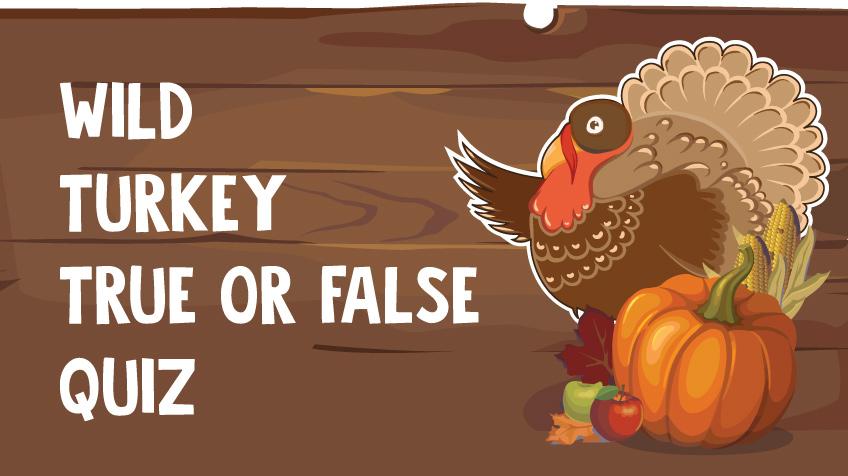 Wild Turkeys True or False Quiz