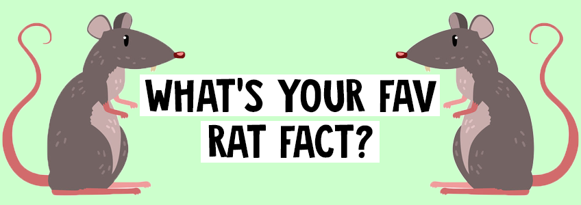 What's your fav rat fact?
